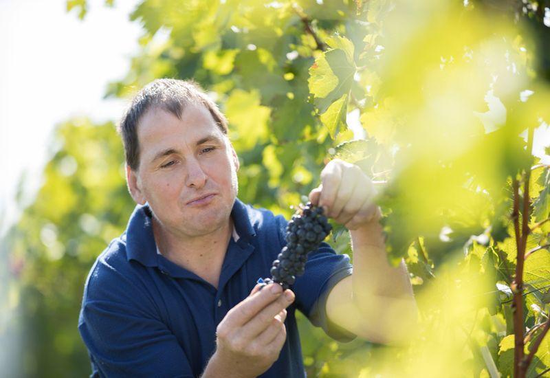 Winzer Körper im Weingarten