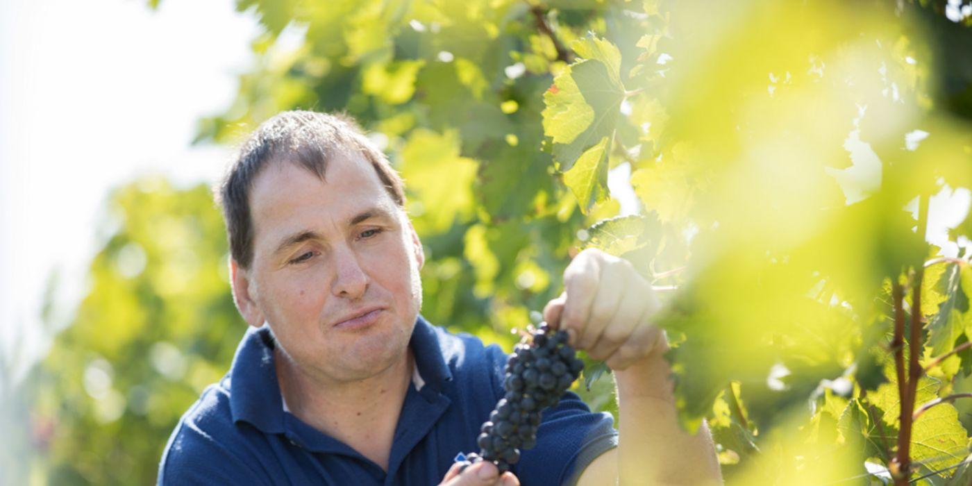 Erich Körper im Weingarten